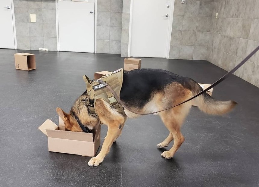 Contractor working dog Ronny participates in a training exercise to locate narcotics.