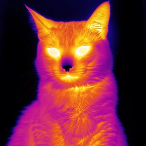 A cat photographed by a thermal imaging camera from FLIR. (photo courtesy of FLIR)