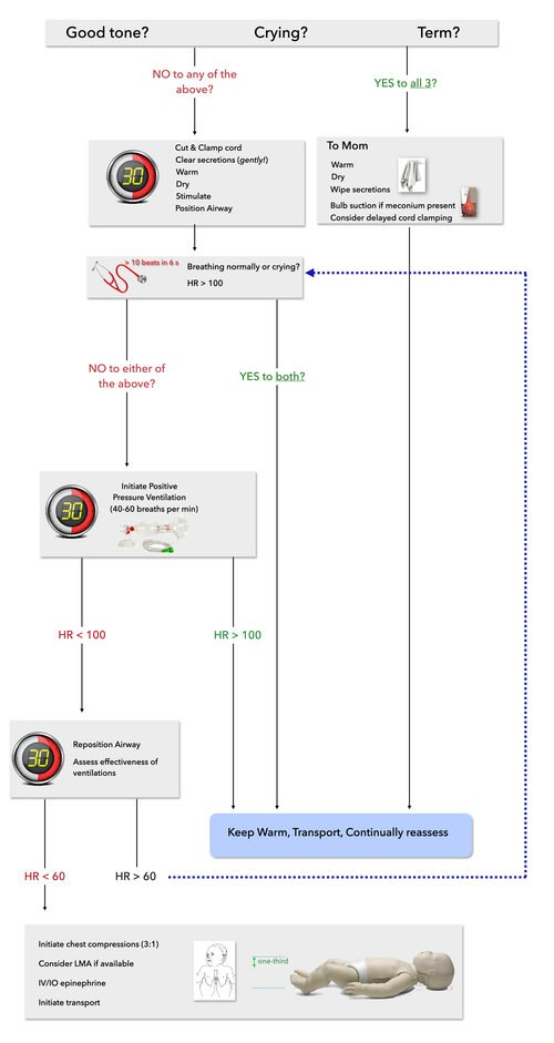 The NRP algorithm adapted to prehospital care (predominantly BLS with exception of epinephrine administration and LMA). As the most common reason for a need to initiate resuscitation in a neonate is a failure to transition from the fetal to the post-natal circulation, initial resuscitation focuses entirely on initiation of ventilation to decrease pulmonary vascular resistance and initiate oxygenation via the lungs. (Image/ Maia Dorsett)