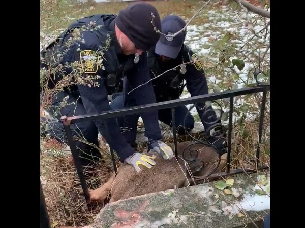 Once freed, the deer appeared unharmed as it sprinted away. (Photo/Euclid Fire Department via Twitter)