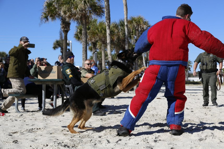 Pictured is a K-9 demonstration for the local community duringone of K9s United's events atSt. Augustine Beach Pier.(Photo/K9s United)