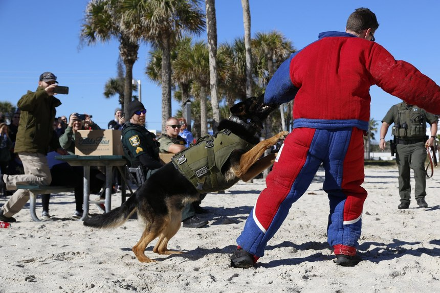 Pictured is a K-9 demonstration for the local community duringone of K9s United's events atSt. Augustine Beach Pier.