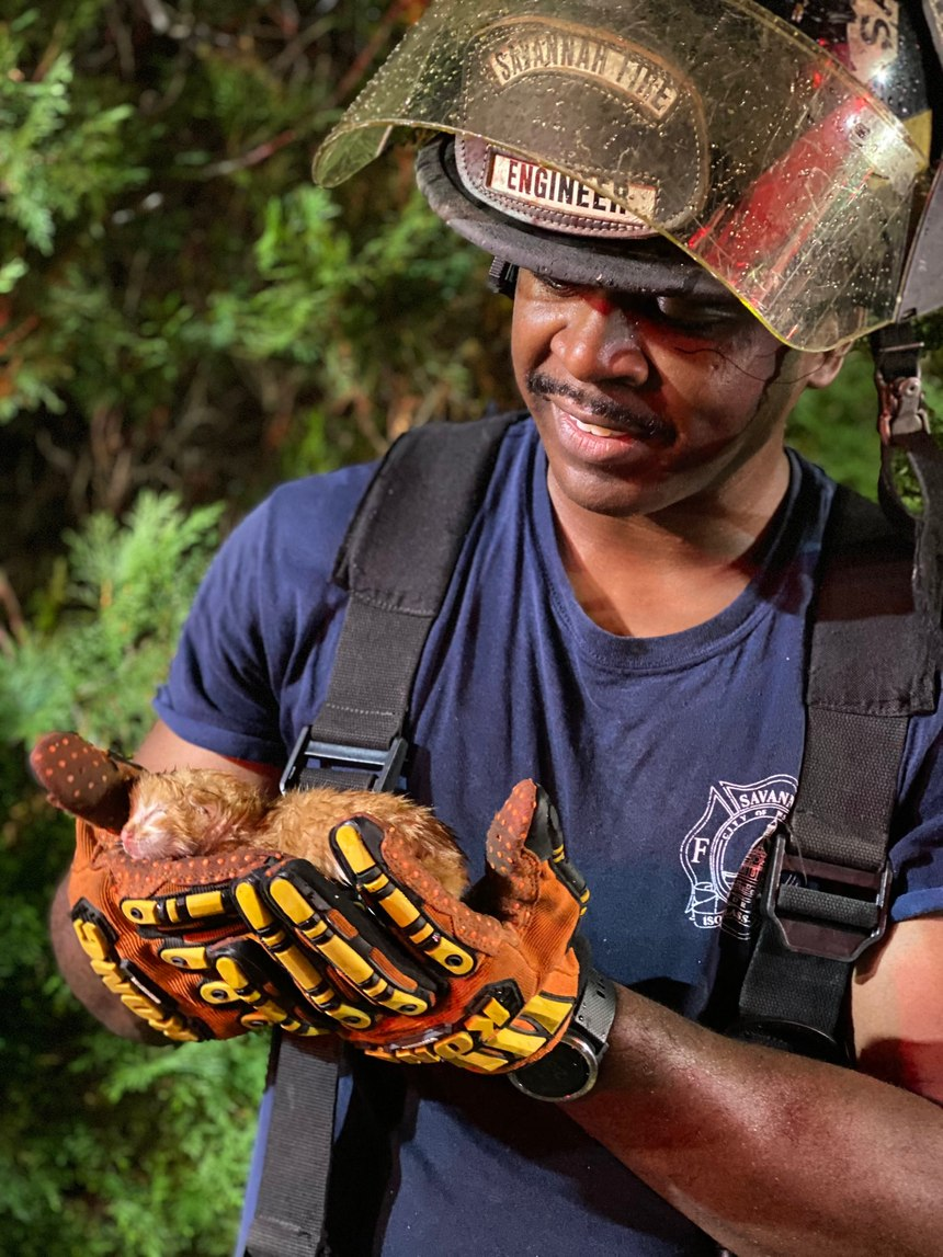 Savannah Fire Engineer Darren Lampley holds a kitten he rescued from a house fire Tuesday.