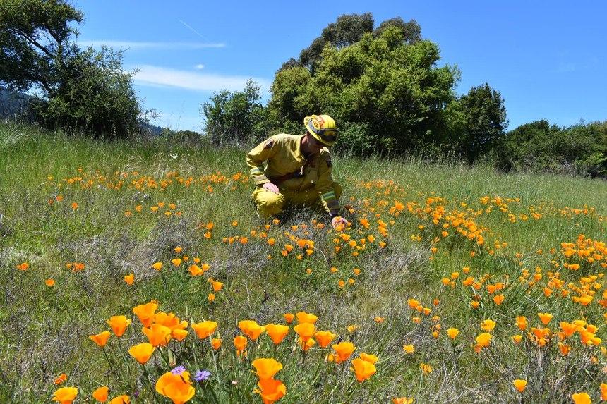 (Photo/CAL FIRE San Mateo-Santa Cruz Unit)