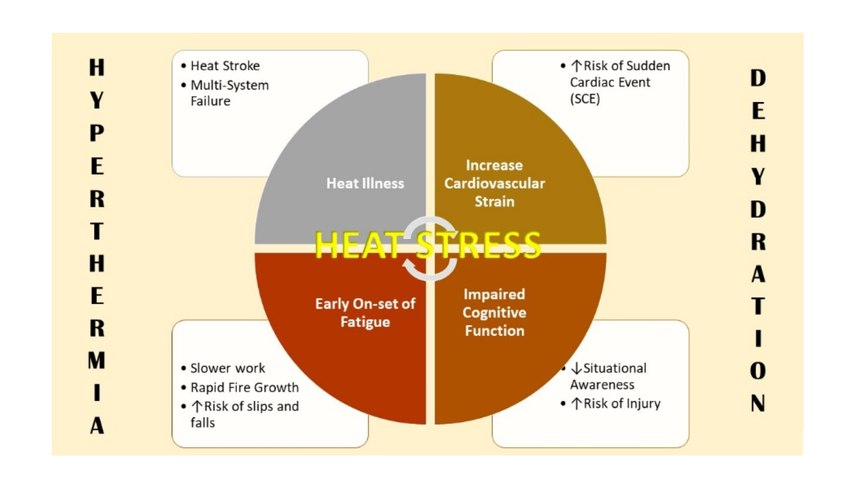 "Figure 1. Hyperthermia and dehydration – aka, the ""terrible twins"" of firefighter heat stress – can cause myriad physiological and behavioral problems for firefighters. (Image/Robert Avsec)"