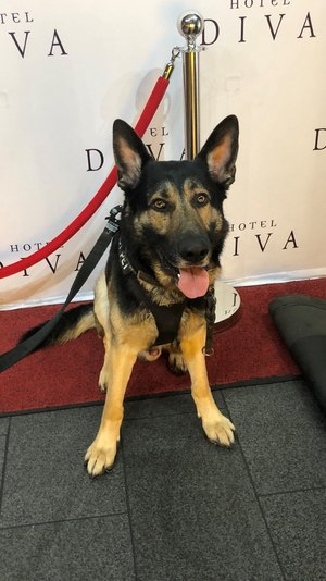 K9 Xoro is helping with animal PSAs, such as reminding people not to break the social distancing when walking pets and while at dog parks.