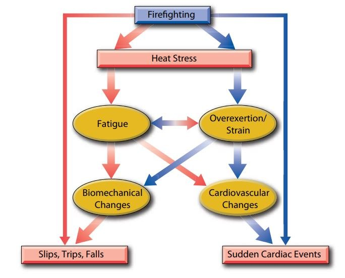 Figure 1. Image Source: Firefighter Fatalities and Injuries: The Role of Heat Stress and PPE. 2008. Firefighter Life Safety Research Center. IFSI. University of Illinois at Urbana-Champaign Illinois.