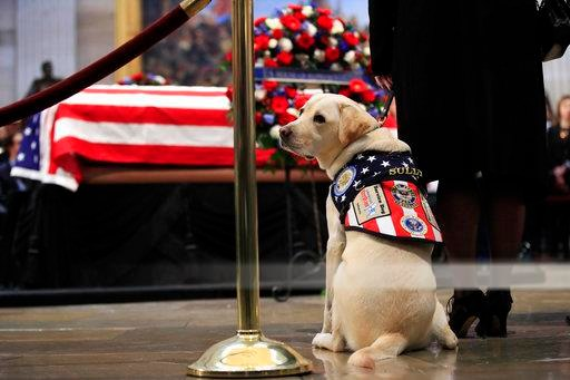 Sully, service dog of former President George H.W. Bush, pays his respect to President Bush as he lie in state at the U.S. Capitol in Washington, Tuesday, Dec. 4, 2018. (AP Photo/Manuel Balce Ceneta)