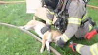 Ohio firefighters perform CPR on dog