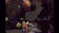 Firefighters rescue and revive dog from house fire