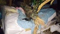 Tree crashes through NY bedroom, crushes sleeping woman