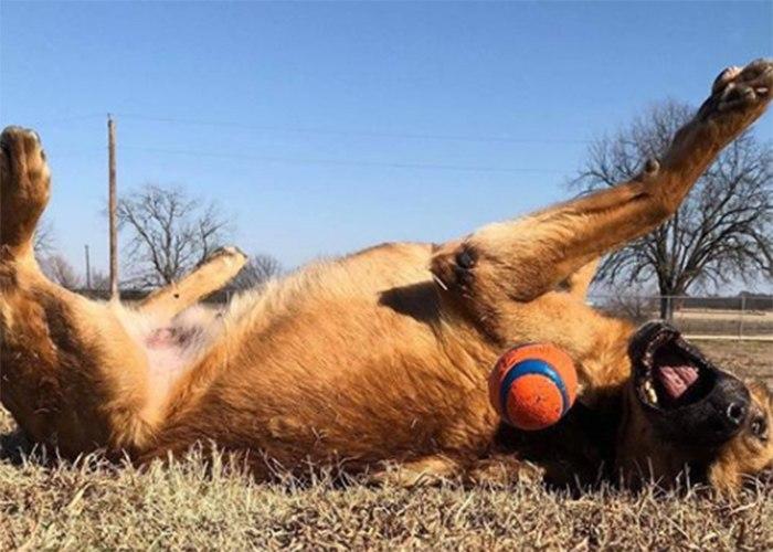 (Photo/Warrior Dog Foundation)
